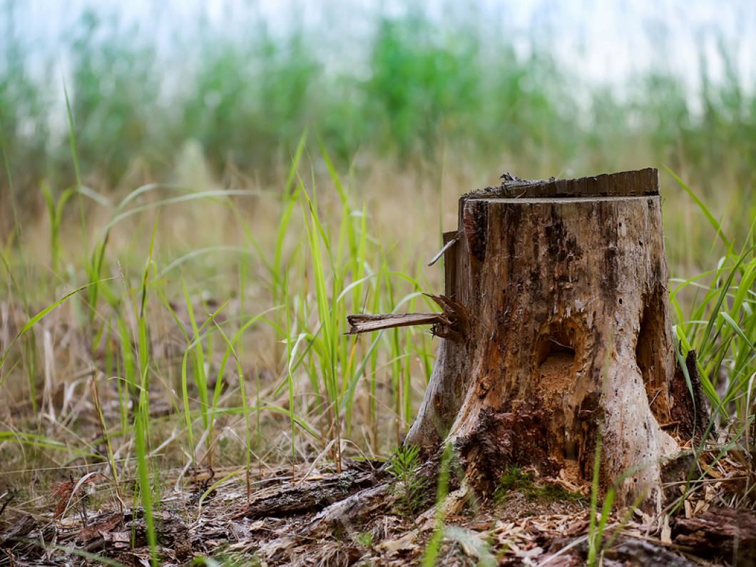 Don't Let Stumps Rot on Your Binghamton or Deposit, NY Property