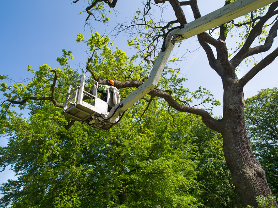 Dependable Tree Trimming in the Deposit, NY area